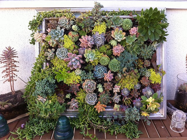 diy-framed-vertical-succulent-garden